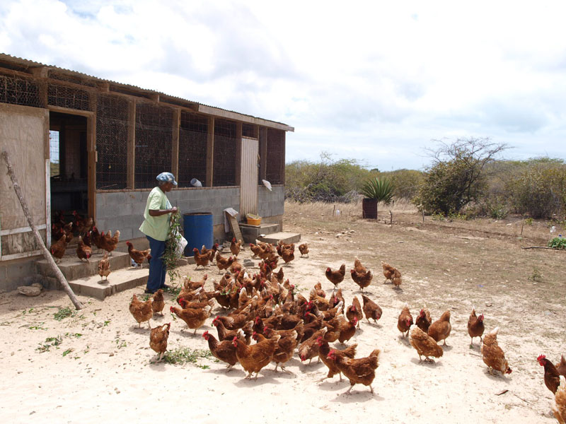 Frances at her chicken farm