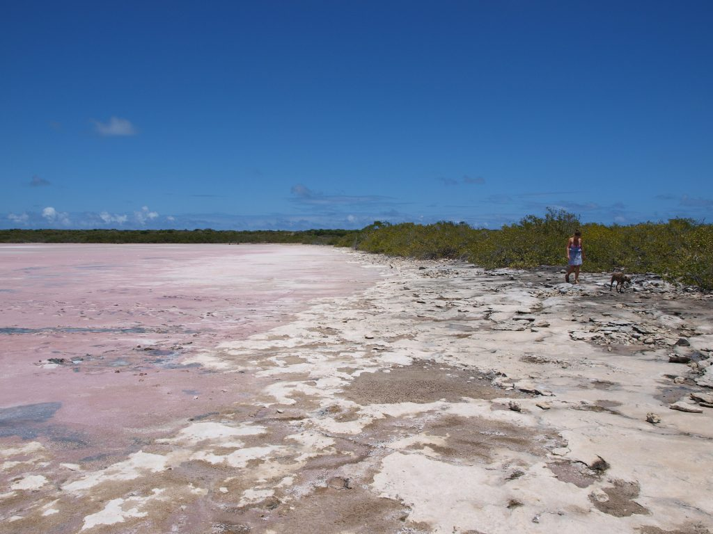 Salt pond ready for sea salt collection