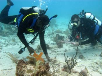 blue halo divers